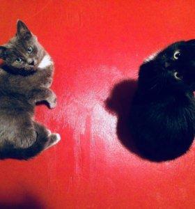 Котята (девочки)