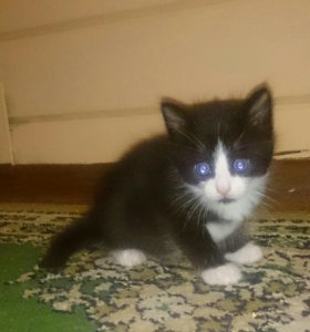 Кошечки, хотят стать подарком к новому году 😊😊