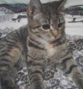 Тигровый котёнок-девочка Буся
