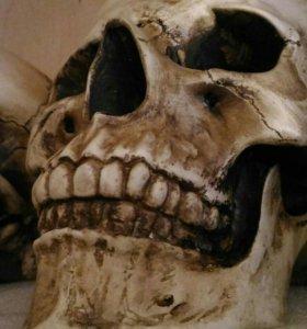 Гипсовые интерьерные черепа