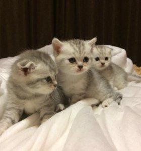 Котята . Мальчики .
