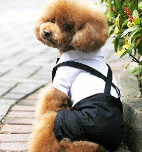 Одежда костюм для собаки