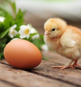 Бройлеры,несушки,инкуб.яйцо