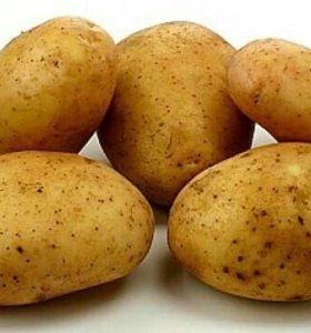 Картошка. Ведро 10 литров