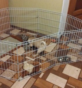 Домашний вольер для собаки