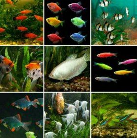 Красивые рыбки для Вашего аквариума на любой вкус
