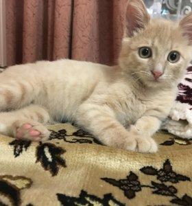 Котик 4 месяца с паспортом