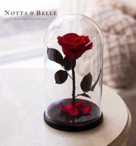 Роза живая