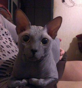 Кот. Вязка.