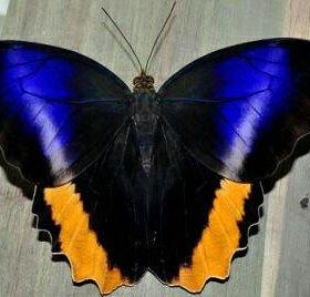 Живые тропические бабочки- оригинальный подарок