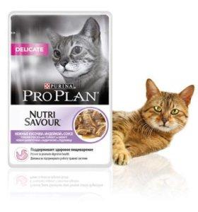 Про план Паучи для кошек  все виды