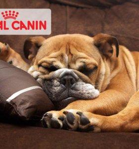 Роял канин для собак  все виды мешки