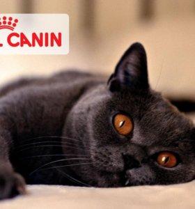 Роял канин для кошек  все виды мешки