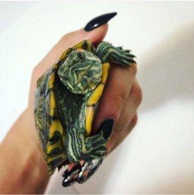 Черепаха и аквариум маленький