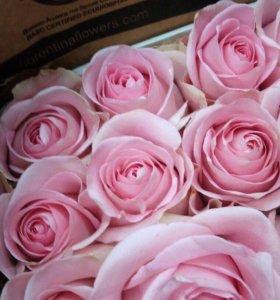 Эвадорские нежнорозовые розы спб