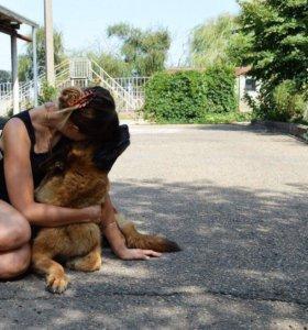 Помощь с собакой