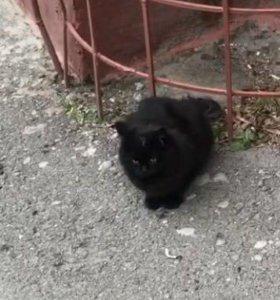 Чёрный котёнок девочка