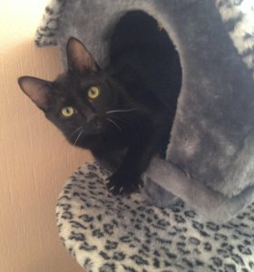 Гостиница-Передержка для котов и кошек