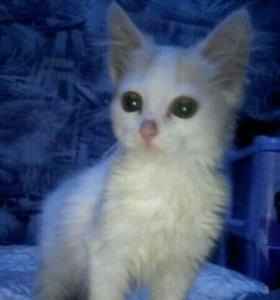 Маленький и милый котёнок