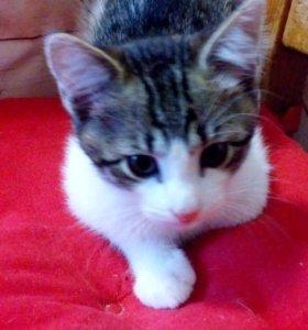 Котёнок мальчик 3 месяца, бесплатно даром