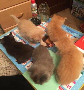 Милые, ласковые, пушистые котята!!!