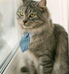 Вязка кошек 🐈 💞