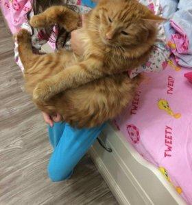 Отдам Кота в хорошие руки стерилизован