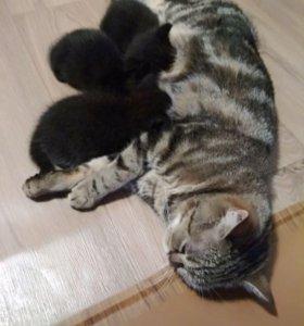 Продам замечательных котят