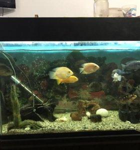 Аквариум на 400 литров, с рыбками (цихлиды)