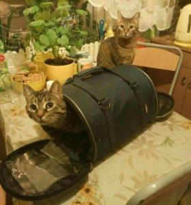 Переноска для кошек и маленьких собачек