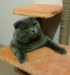 Кот приглашает кошек на вязку