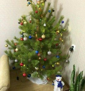 Новогодняя живая елка, сосна