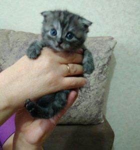 Котята маленькие красивые