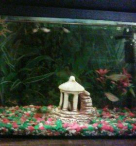Аквариум 10литр. с рыбками