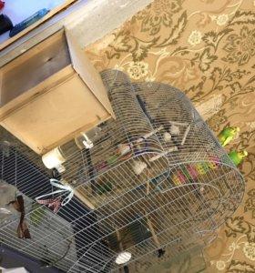 Клетка и попугаи 2шт