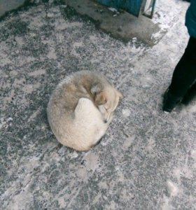 Собака на улице мерзнет