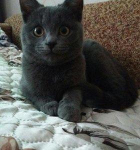 Кошка Ума