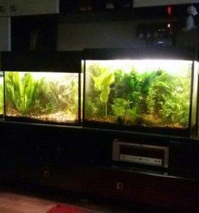 Много растений