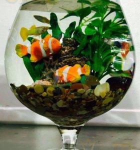 Ваза бокал, аквариум шар 7 литров (1,2,3 и 5л)