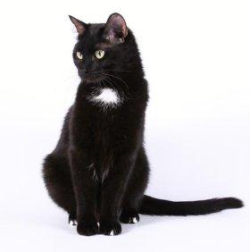 Котик Мауро ищет дом!