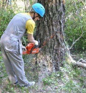 Арбористика, удаление деревьев, спил, рубка