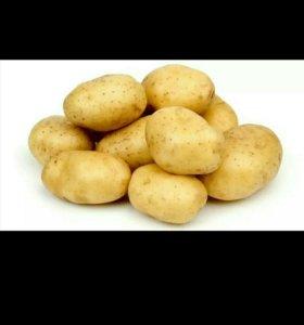 Картофель. Бесплатная доставка.