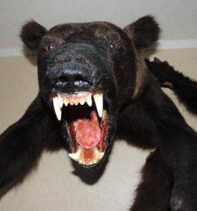 Продам чюгело медведя гризли
