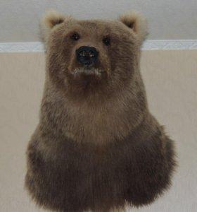 Продам чючело медведя