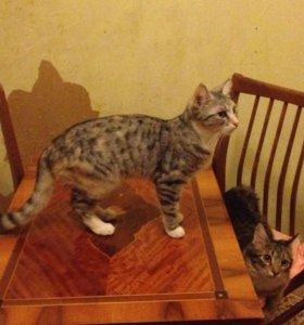 Котята ,кошки ,коты бесплатно