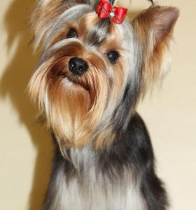 Стрижка собак(груминг)