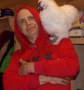 Породная птица, цыплята