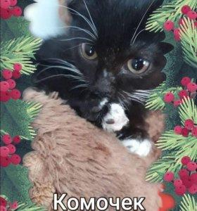 Срочно ! Отдам котенка!