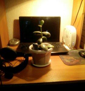 Денежное дерево 🌿