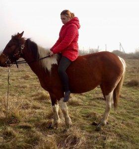 Лошадь возможен обмен